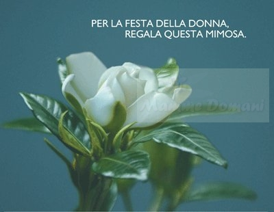 b_450_0_0_1___images_stories_MondoMad_articoli_gardenia_aism.jpg